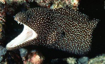 moray-eel-pattern